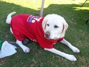 photo of SALW-Dog in shirt