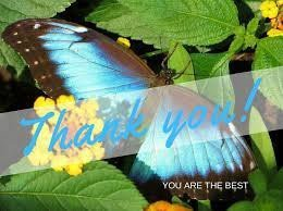photo of butterfly on leaf. Thank you on it.